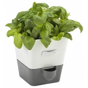 Cole & Mason Self Watering Herb Keeper